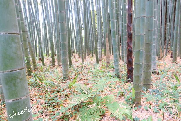 鎌倉 英勝寺-303