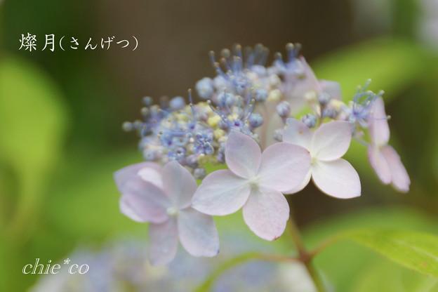 Kamakura-730