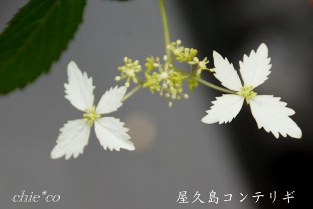 Kamakura-744