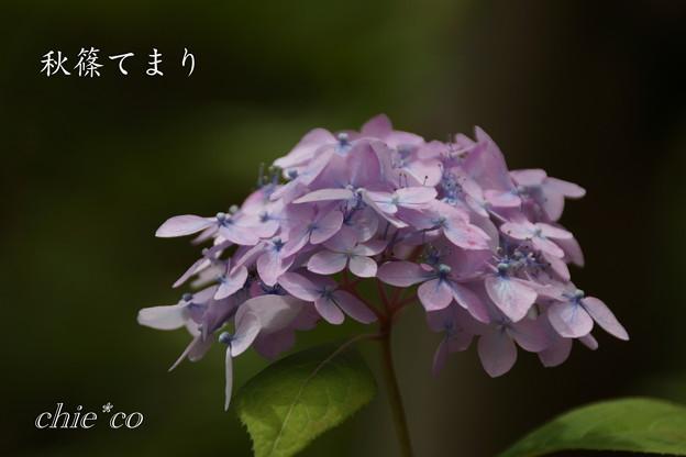 Kamakura-819