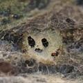 写真: 土蜂の巣?