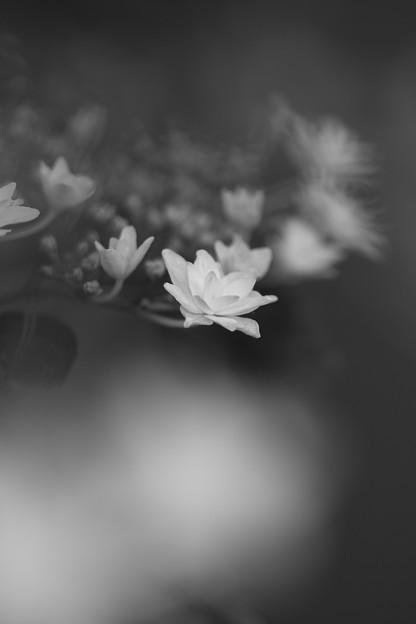 日陰に咲く(2)