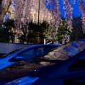 夜桜映り込み1