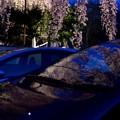 夜桜映り込み2