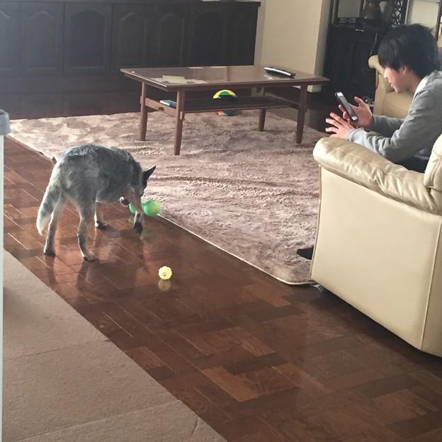 Photos: 怒られても気にせずおもちゃで遊ぶマックス(笑)