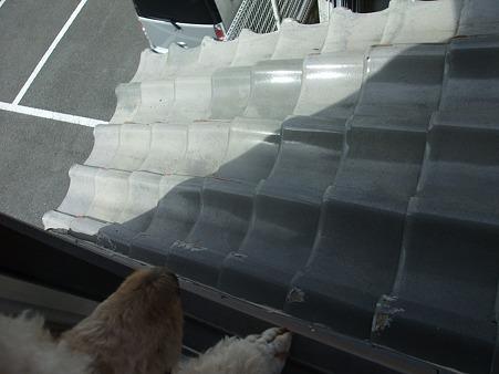 下の柵からこの屋根にのぼり窓から・・・
