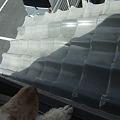 Photos: 下の柵からこの屋根にのぼり窓から・・・