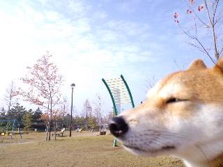 Photos: まけ2