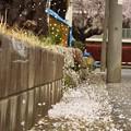 Photos: 春の終息