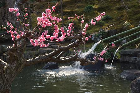 紅梅と放生池!(120303)