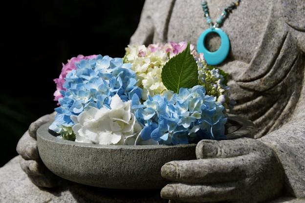写真: 花想い地蔵のアジサイ!201506
