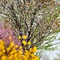 北の国にも春が来た