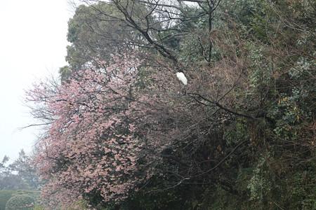湯築城(道後公園) - 03