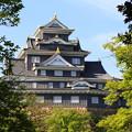 Photos: 新緑の金烏城