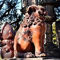 Photos: 住吉大社北門の狛犬阿形-2