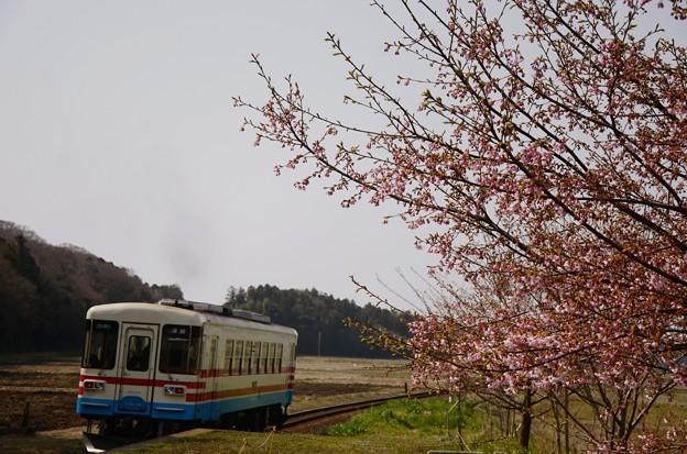 桜咲く中根駅ミキ300-103発車