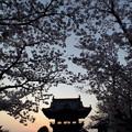 写真: 桜門