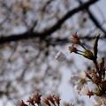 Photos: 花散る瞬間!!!