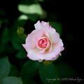 flowers-6620