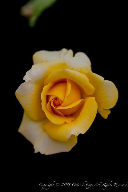 Photos: flowers-6955