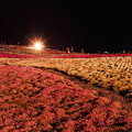 芝桜ライトアップ