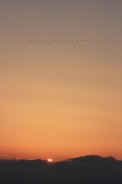 渡り鳥 北へ