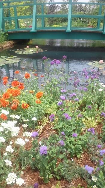 西武池袋本店にて屋上ガーデンの花たち