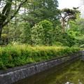 橋を囲む緑