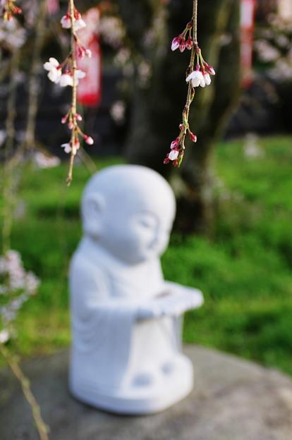 花の下にて