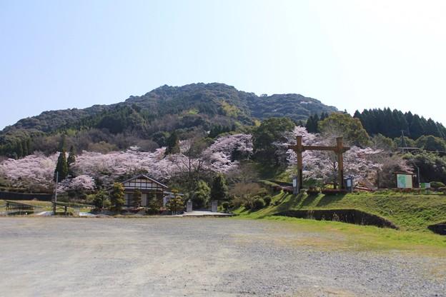 Photos: 大津山の桜
