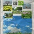 GW春のお勧め観光は渡良瀬遊水地2015.4.30