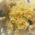 風薫るバラ色の日々 ♪