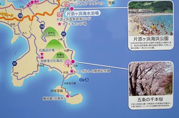 IMGP4220周防大島町、五条の千本桜5