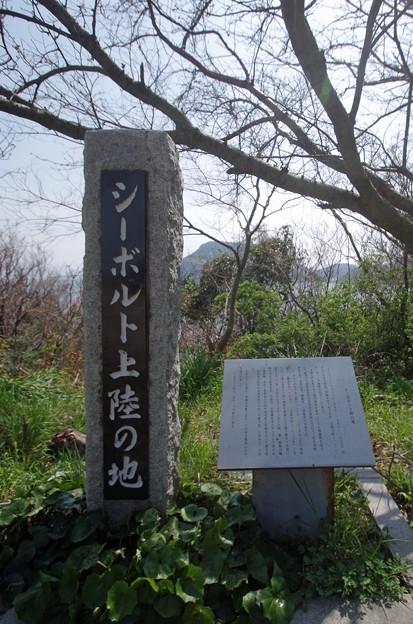 IMGP4224周防大島町、五条の千本桜4