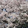 Photos: 15.03.30.法明寺(南池袋)
