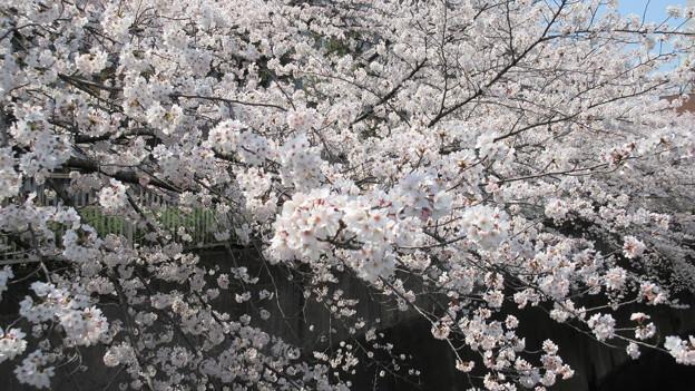 15.03.30.都電・神田川 景観(高田2丁目・西早稲田3丁目)