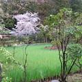 15.04.07.大田ノ沢のカキツバタ群落(北区)