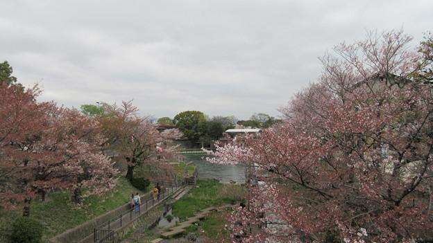 15.04.07.琵琶湖疏水(京都市左京区)