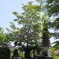 長岳寺(阿智村)