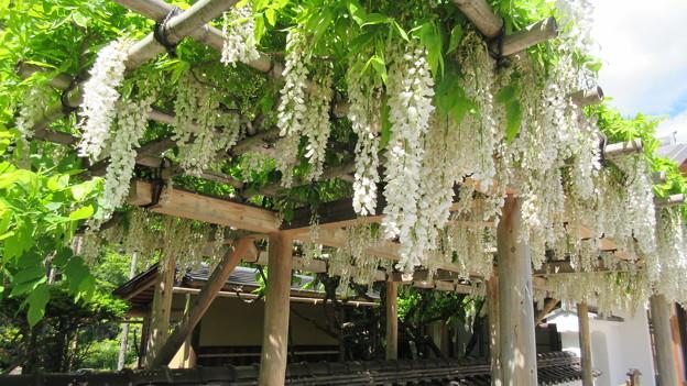 15.05.21.興禅寺(木曽町)