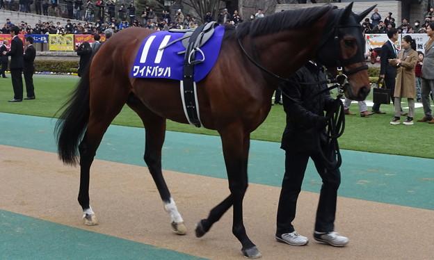 ワイドバッハ(1回東京8日 11R 第32回 フェブラリーステークス(GI)出走馬)