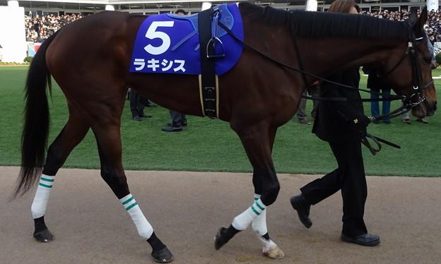 ラキシス(4回中山8日 10R 第59回グランプリ 有馬記念(GI)出走馬)