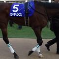 Photos: ラキシス(4回中山8日 10R 第59回グランプリ 有馬記念(GI)出走馬)