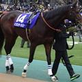 インカンテーション(1回東京8日 11R 第32回 フェブラリーステークス(GI)出走馬)