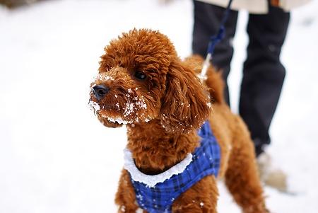 犬は喜び雪を食う