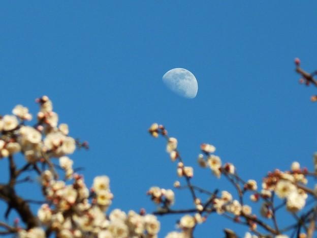 写真: ~春の月~