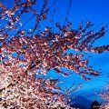 ~櫻・富士山~