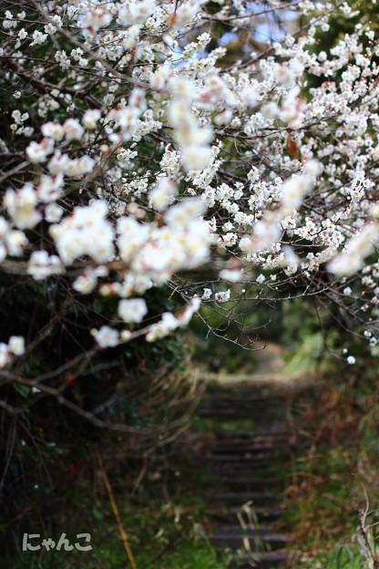 写真: ~春が薫るトンネル~
