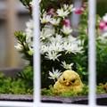 ~お庭番~
