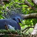 ~bird sanctuary~